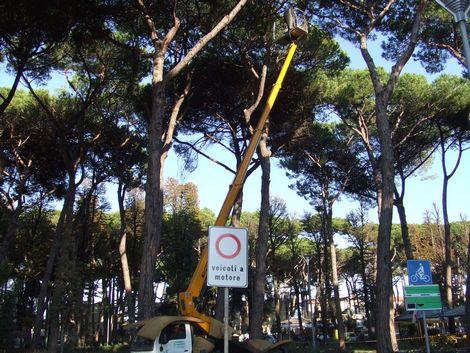 Interventi di manutenzione del verde in citt news - Interventi di manutenzione ...