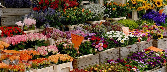 Marina in fiore profumi e colori nel centro di tonfano news viareggino for Arredo giardino pietrasanta