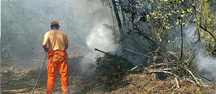 Piromane in pineta distrutti 5000 metri quadrati news for Casa di 5000 metri quadrati