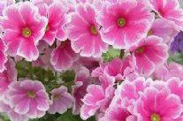 Oltre 23 mila presenze per Marina in Fiore e per il Country Garden Show. Una grande edizione, tanti banchi di fiori e qualità.