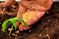 Ungulati: arrivano gli ultrasuoni per difendere le coltivazioni